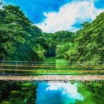 Flóra a příroda Filipín je neuvěřitelně bohatá
