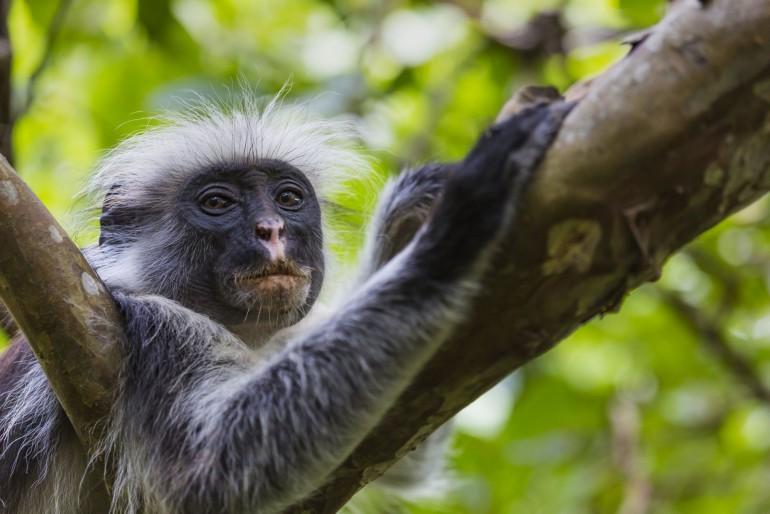 Fauna a flóra Zanzibaru