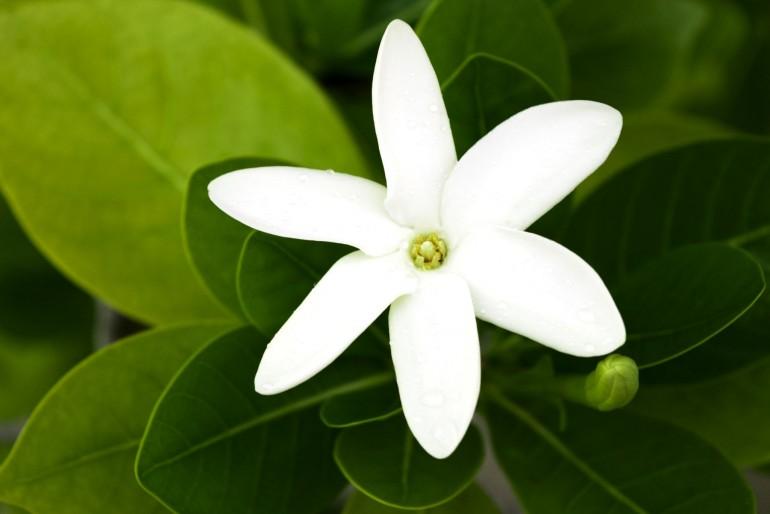 Fauna a flóra Francouzské Polynésie