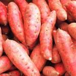 Sladké brambory camote