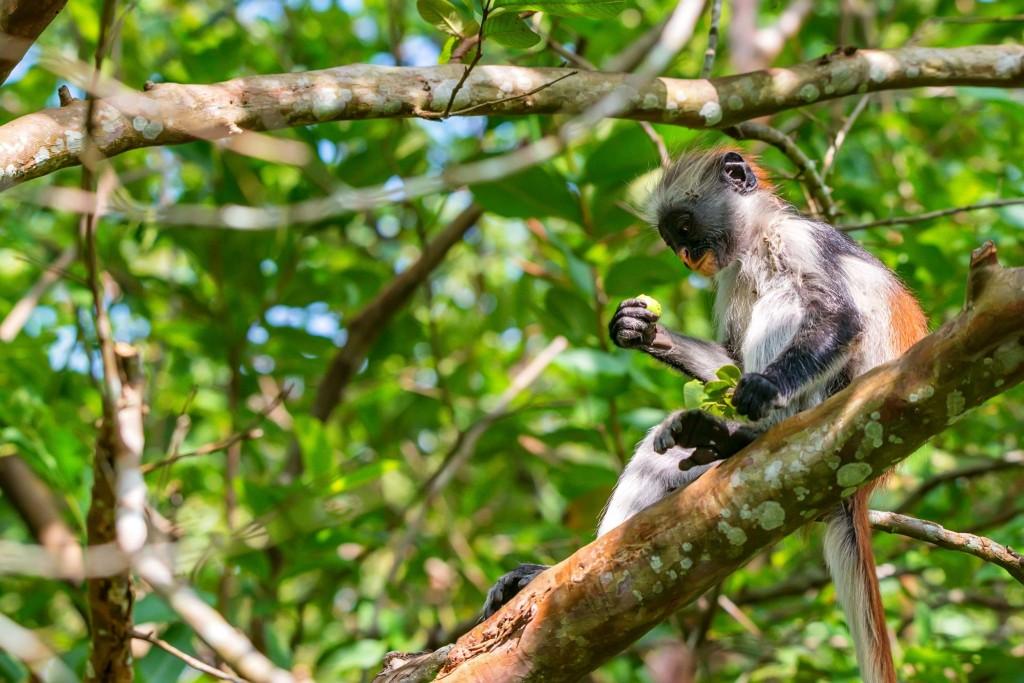 Typický obyvatel pralesa Jozani