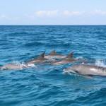 Výlet za delfíny z Kizimkazi