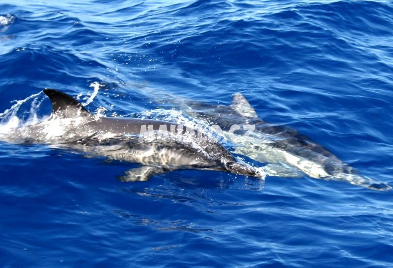 Delfíni v Řecku