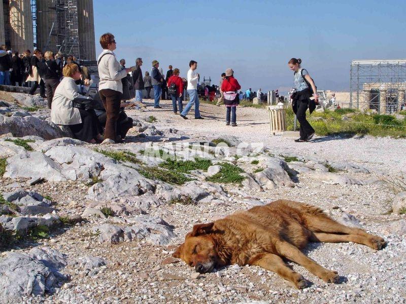 Řečtí potulní psi