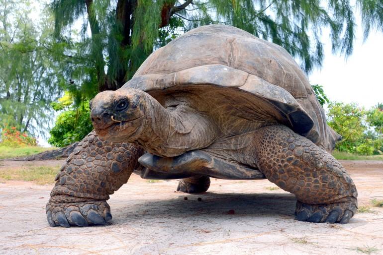Fauna a flóra Seychel