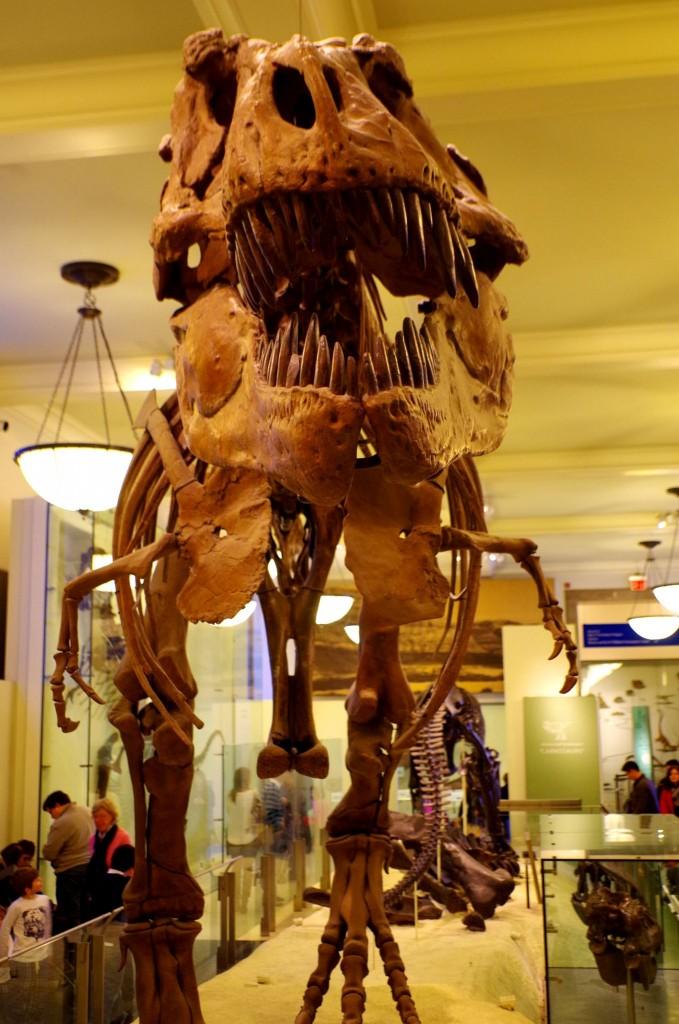 Tyrranosaurus Rex v Přírodovědném muzeu v New Yorku
