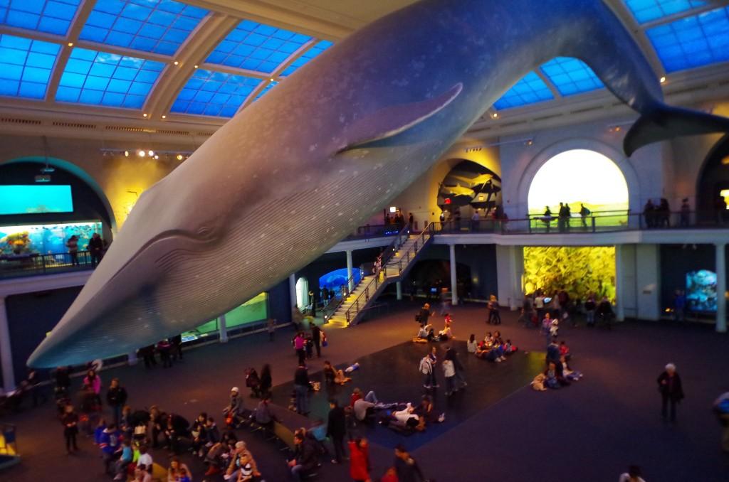 V americkém přírodovědném muzeu