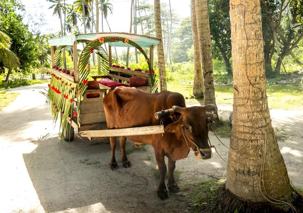 Volské taxi na Seychelách