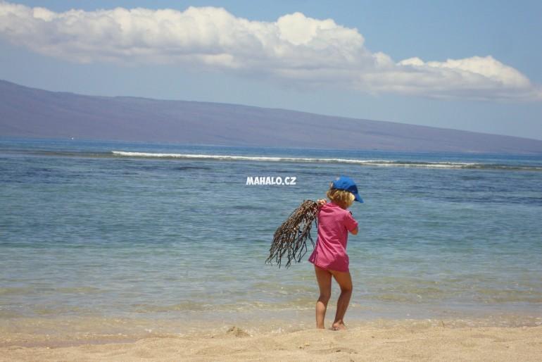 I Havaj ma sve mouchy…tedy spis stonozky