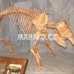 Kostra trpasličího slona z ostrova Tilos