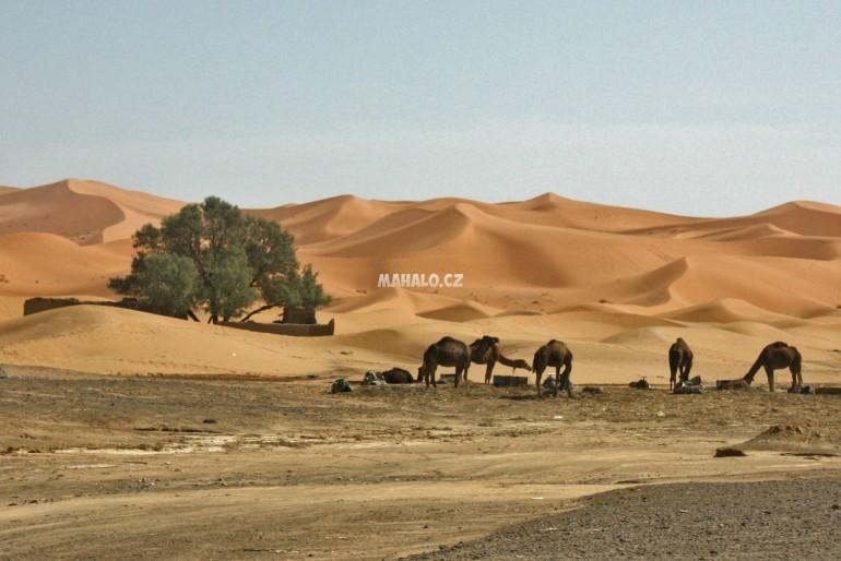 Všetko je možné alebo berber whisky, gnawa a Sahara