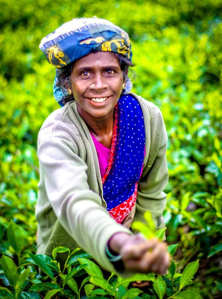 Sběračka čaje - v ruce drží ony tři hlavní čajové lístky