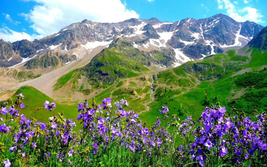 Flóra italských Alp