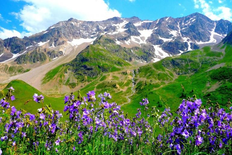 Fauna a flora Itálie