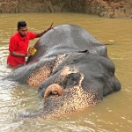 Mahút a jeho slon