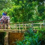 Projížďka na slonech v Millenium elephant orphanage