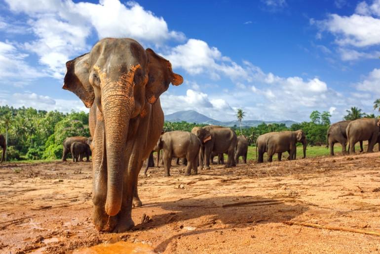 Sloní sirotčinec Pinnawala