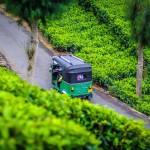 Tuktuk mezi čajovými plantážemi pod Lipton's Seat