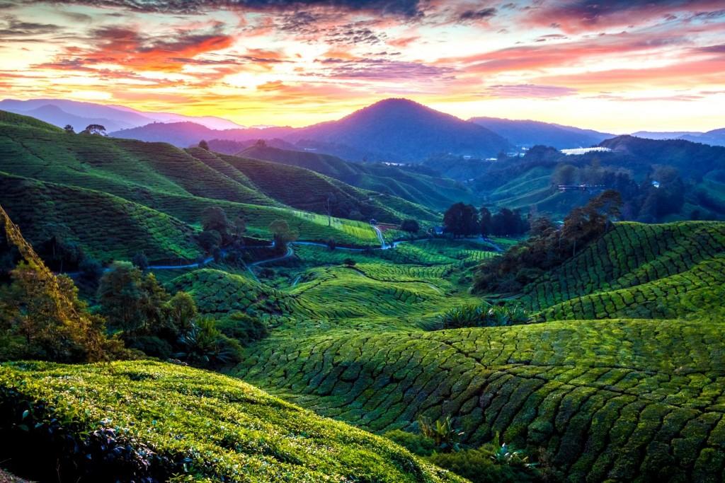 Krásná krajina státu Pahang - čajové plantáže na Cameron Highlands