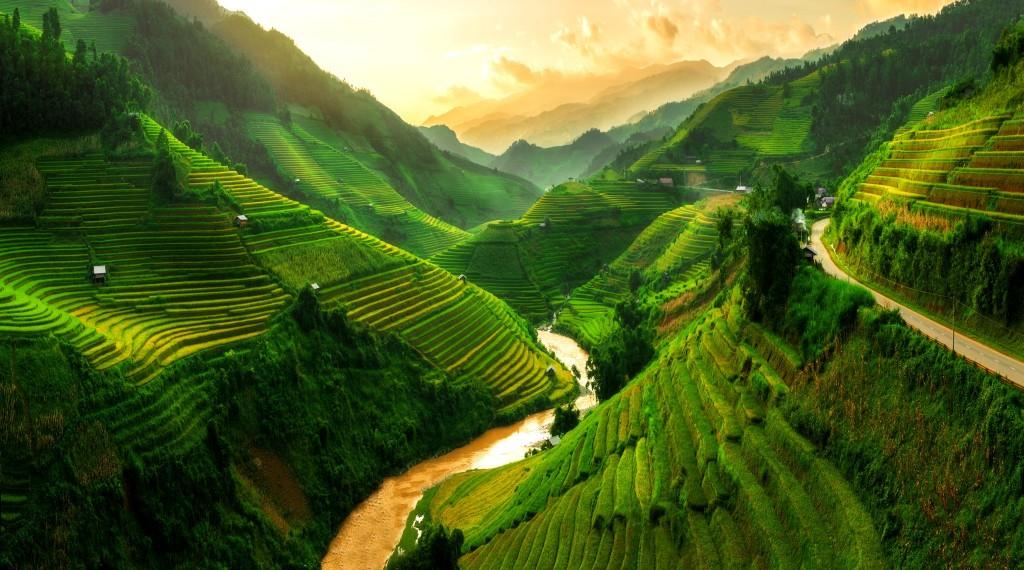 Rýžová pole v oblasti Sapa