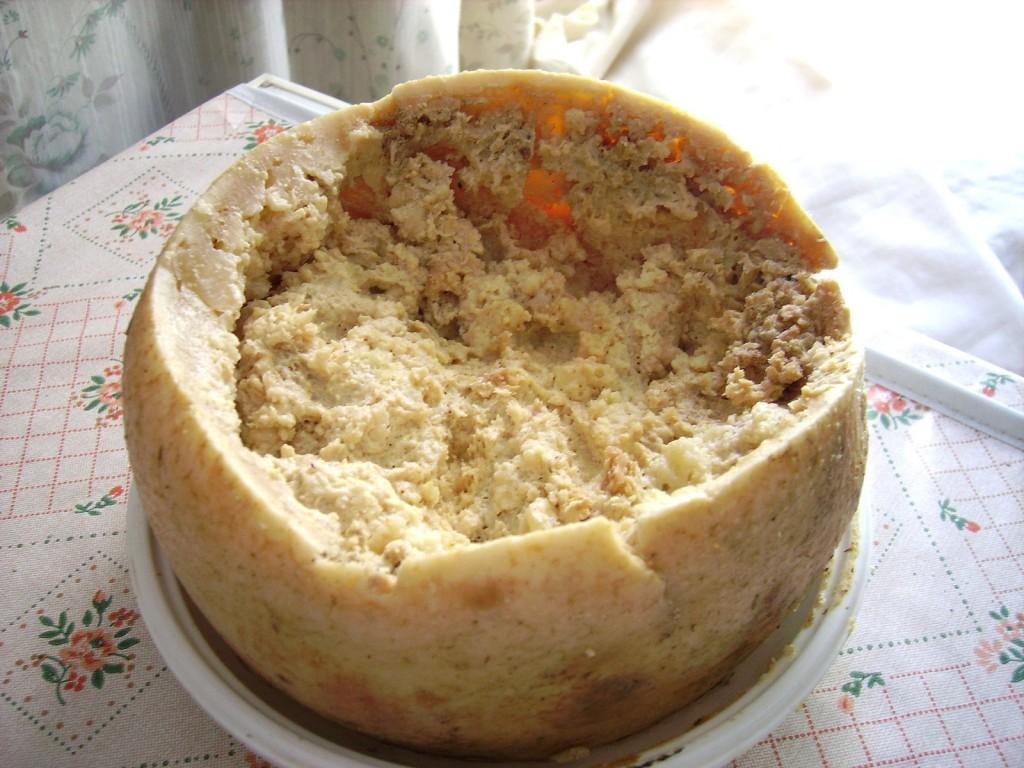 Casu marsu - sýr s živými červy