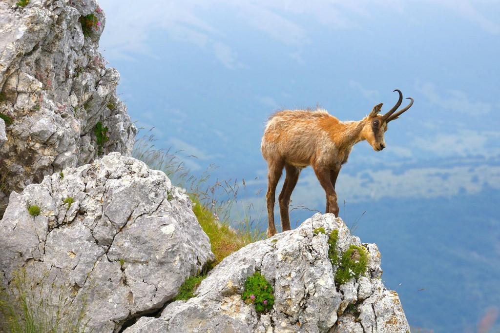 Obyvatel národního parku Abruzzo