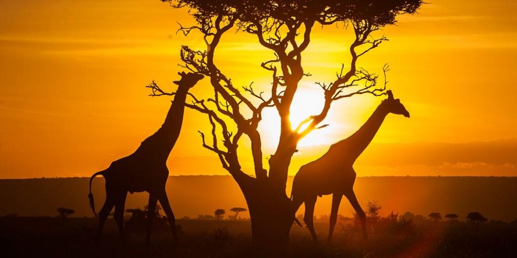 Keňská savana