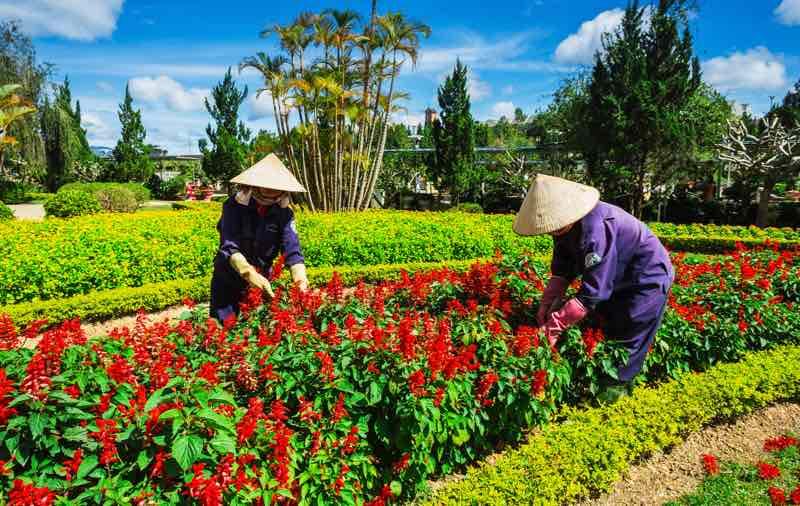 Květinová zahrada města Dalat