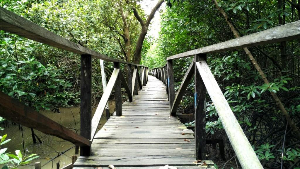 Margomulyo (mangrovový les)