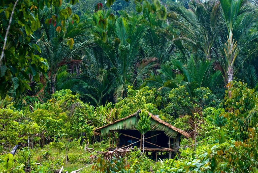 Na ostrově Siberut