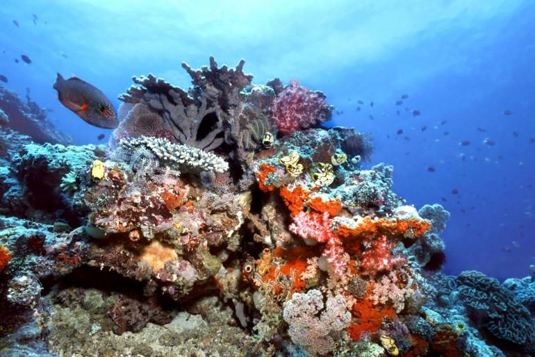 Národní park Kepulauan Togean
