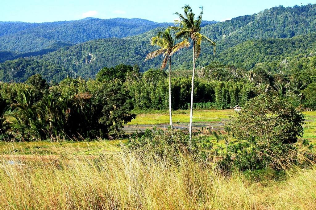 Národní park Lore Lindu