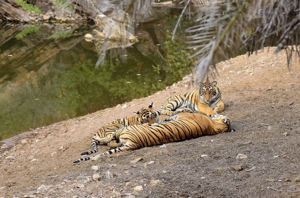 Národní parky Indie