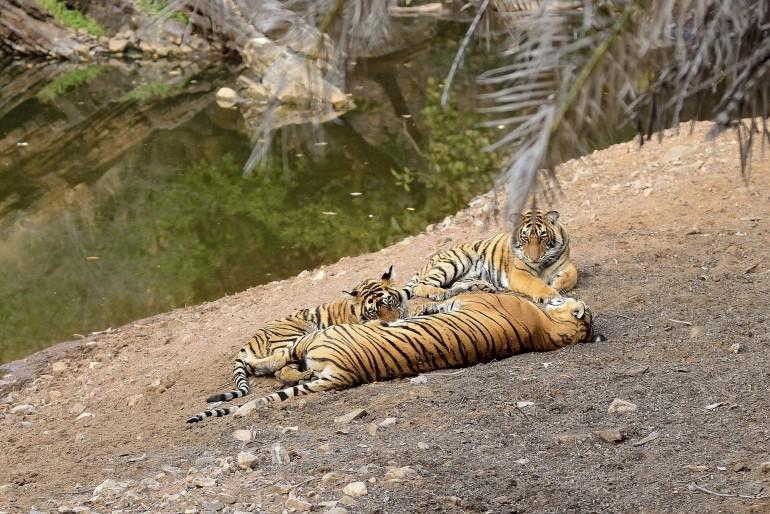 Národní parky Indie a jejich unikátní svět