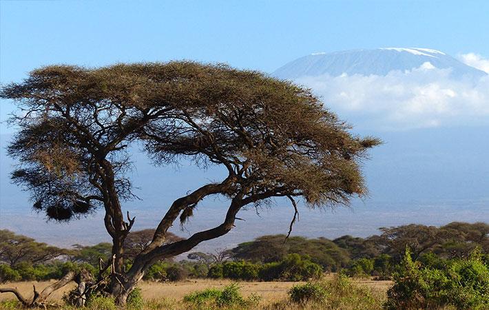 V národním parku Mt. Kenya