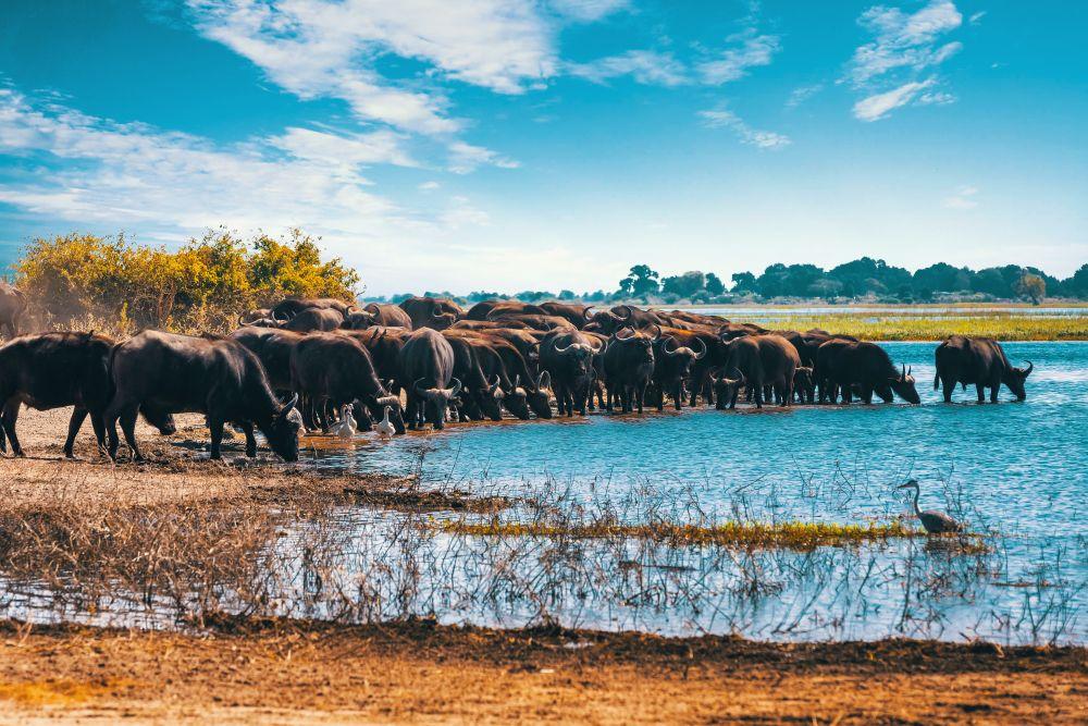 Chobe park
