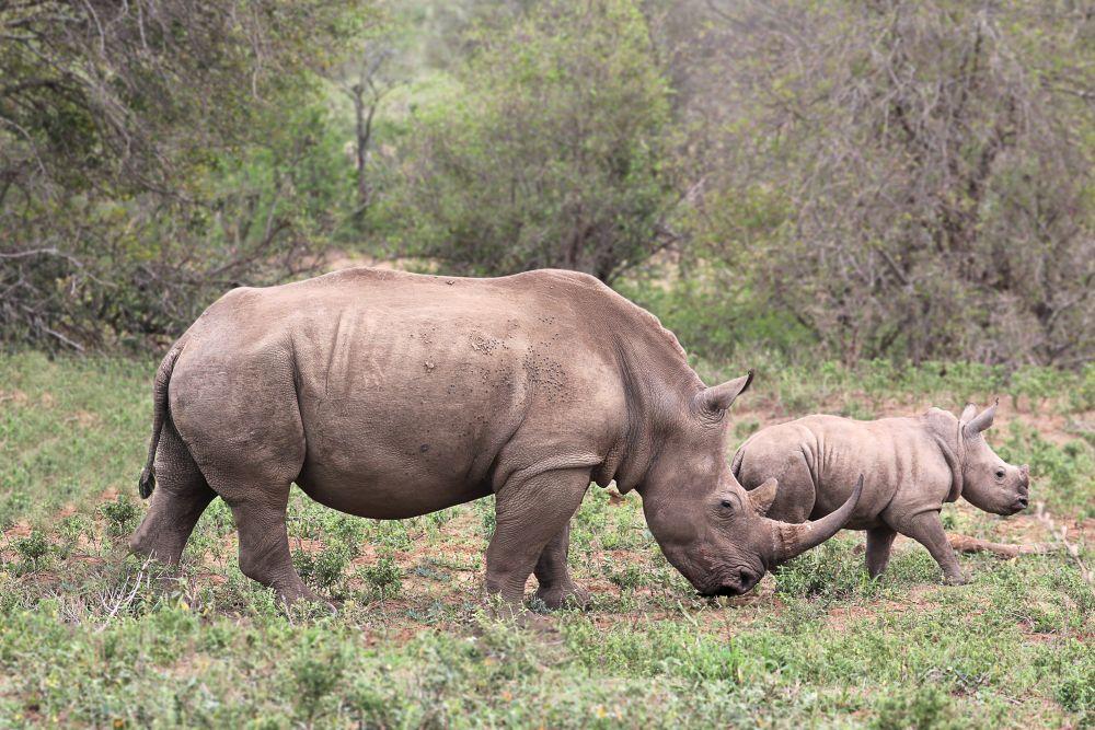 Krugerův park
