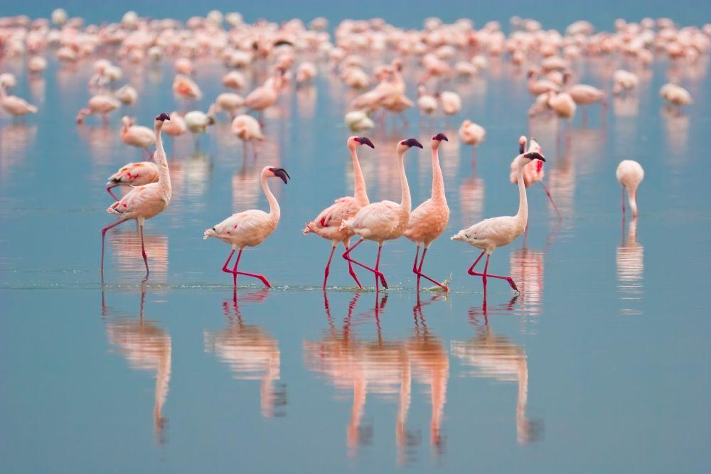 Pozorování ptáků u Lake Nakuru
