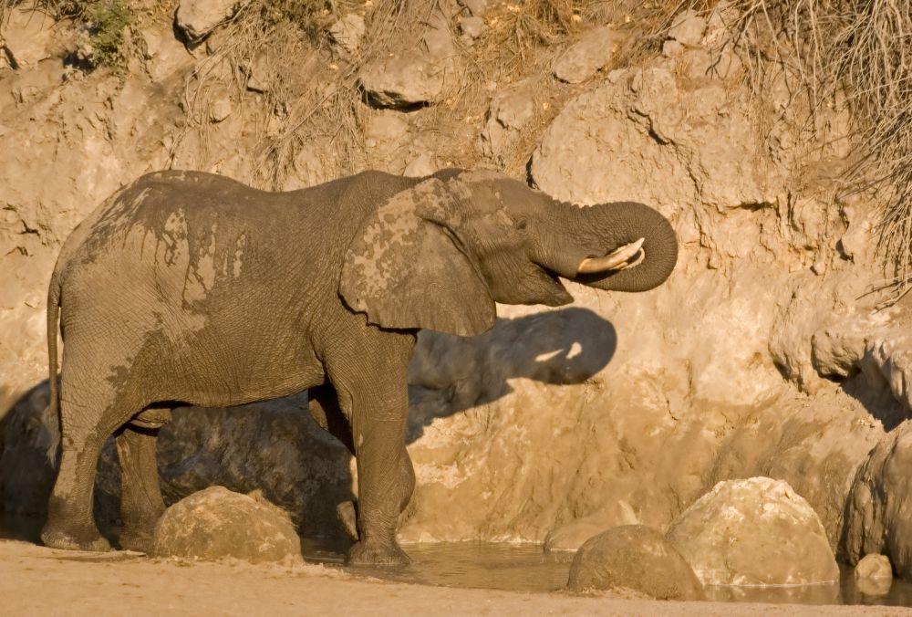 Pozorování zvěře v Makgadikgadi Pans