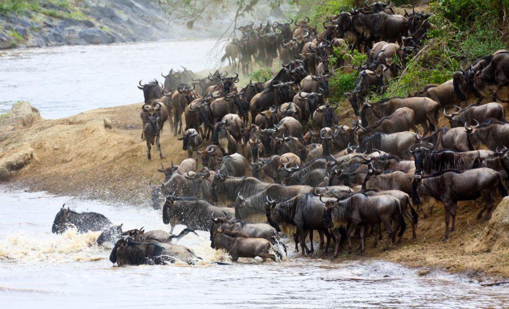 Velká migrace v Masai Mara