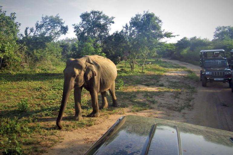 Za slony do Uda Walawe na Srí Lance