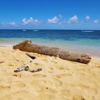 Pláž na Kauai