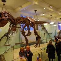 Muzeum přírodní historie